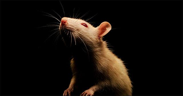 Malware RAT là gì? Tại sao nó lại...