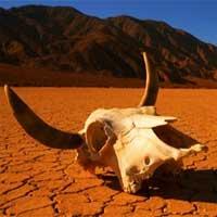 17 dấu hiệu cho thấy cuộc đại tuyệt chủng lần thứ 6 - cơn ác mộng của nhân loại đang sắp quét qua trái đất