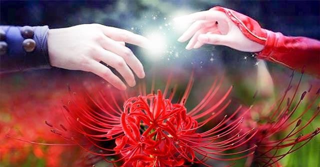 Hình ảnh hoa bỉ ngạn - Tình yêu không trọn vẹn 28