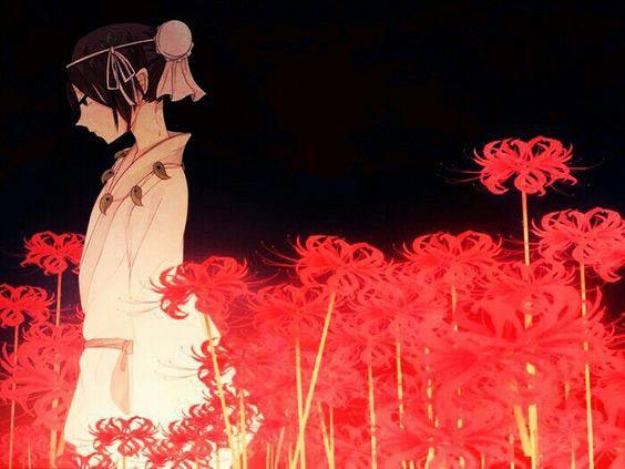 Hình ảnh hoa bỉ ngạn - Tình yêu không trọn vẹn 30
