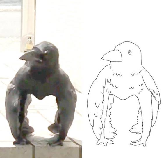 Hình vẽ này giúp người xem vén màn bí mật của tư thế đứng kì lạ khoe cơ bắp trá hình của con quạ. (Ảnh: Twitter/@a_ane74).