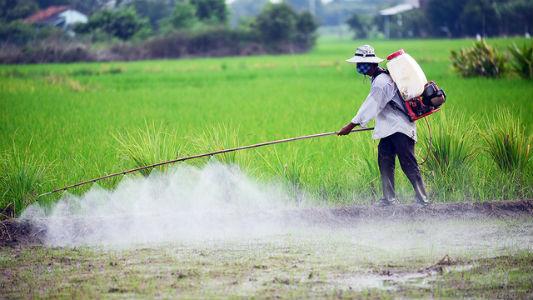 Máy phun thuốc trừ sâu dễ sử dụng.