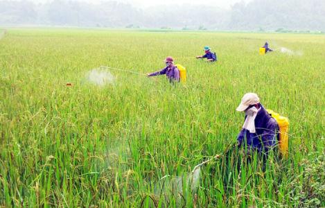 Những lưu ý cho bà con nông dân khi tìm mua máy phun thuốc trừ sâu