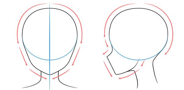 Hình dạng cơ bản của phần đầu