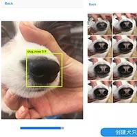 """Công ty khởi nghiệp Trung Quốc thử nghiệm dự án theo dõi những chú chó thất lạc thông qua """"dấu vân mũi"""""""