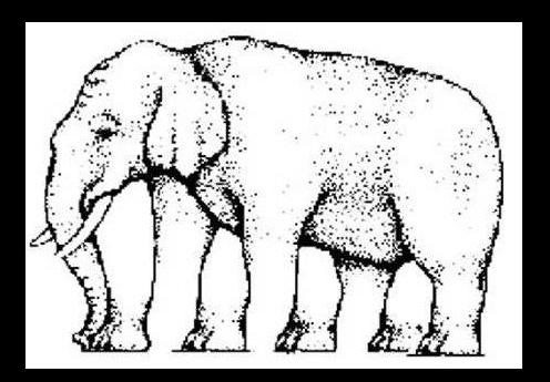 Con voi voi này có bao nhiêu chân?