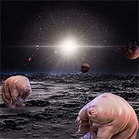 Những sinh vật nhỏ bé này đã vượt qua quãng đường 384.400km từ trái đất và đang đổ bộ lên mặt trăng