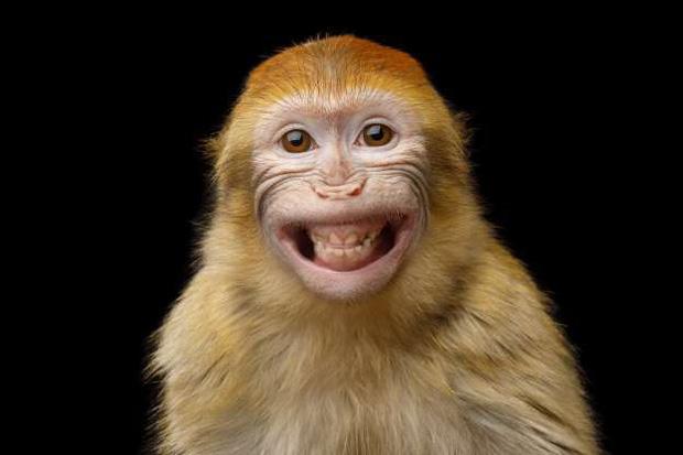 """Nụ cười """"tươi như hoa"""" của một chú khỉ"""