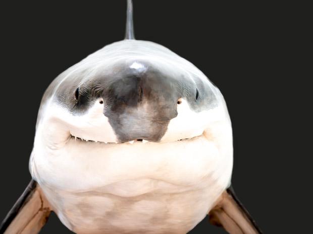 """Nụ cười đáng yêu của """"hung thần biển cả"""" cá mập khiến nhiều người không khỏi giật mình"""