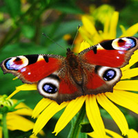 Những loài bướm đẹp nhất thế giới