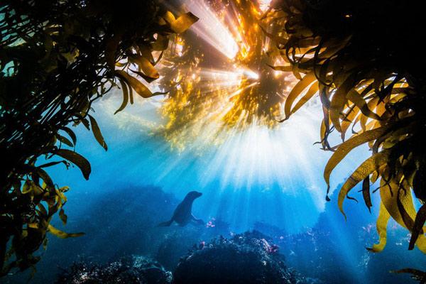 Chú rái cá đang bơi dưới làn nước trong xanh được chiếu sáng bởi ánh nắng mặt trời