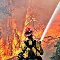 Các nhà khoa học sử dụng AI để dự đoán các vụ cháy rừng quy mô lớn