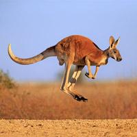 Tại sao không có sinh vật ba chân nào trên Trái Đất?