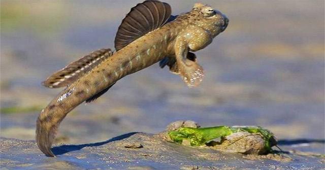 10 loài cá săn mồi trên cạn trong thế giới tự nhiên