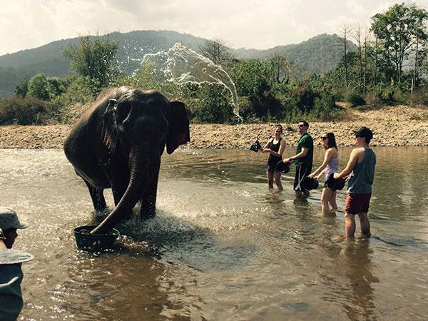 Té nước tắm cho chú voi mà cũng có thể tạo ra được một chú voi khác, quả là kỳ diệu.
