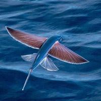 11 loài cá bơi nhanh nhất thế giới