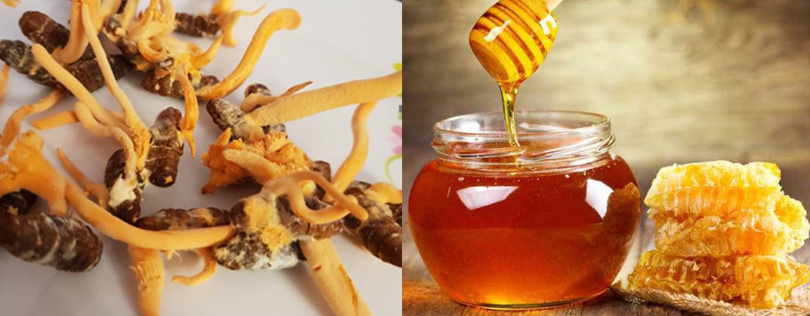 Tác dụng của đông trùng hạ thảo ngâm mật ong là gì?