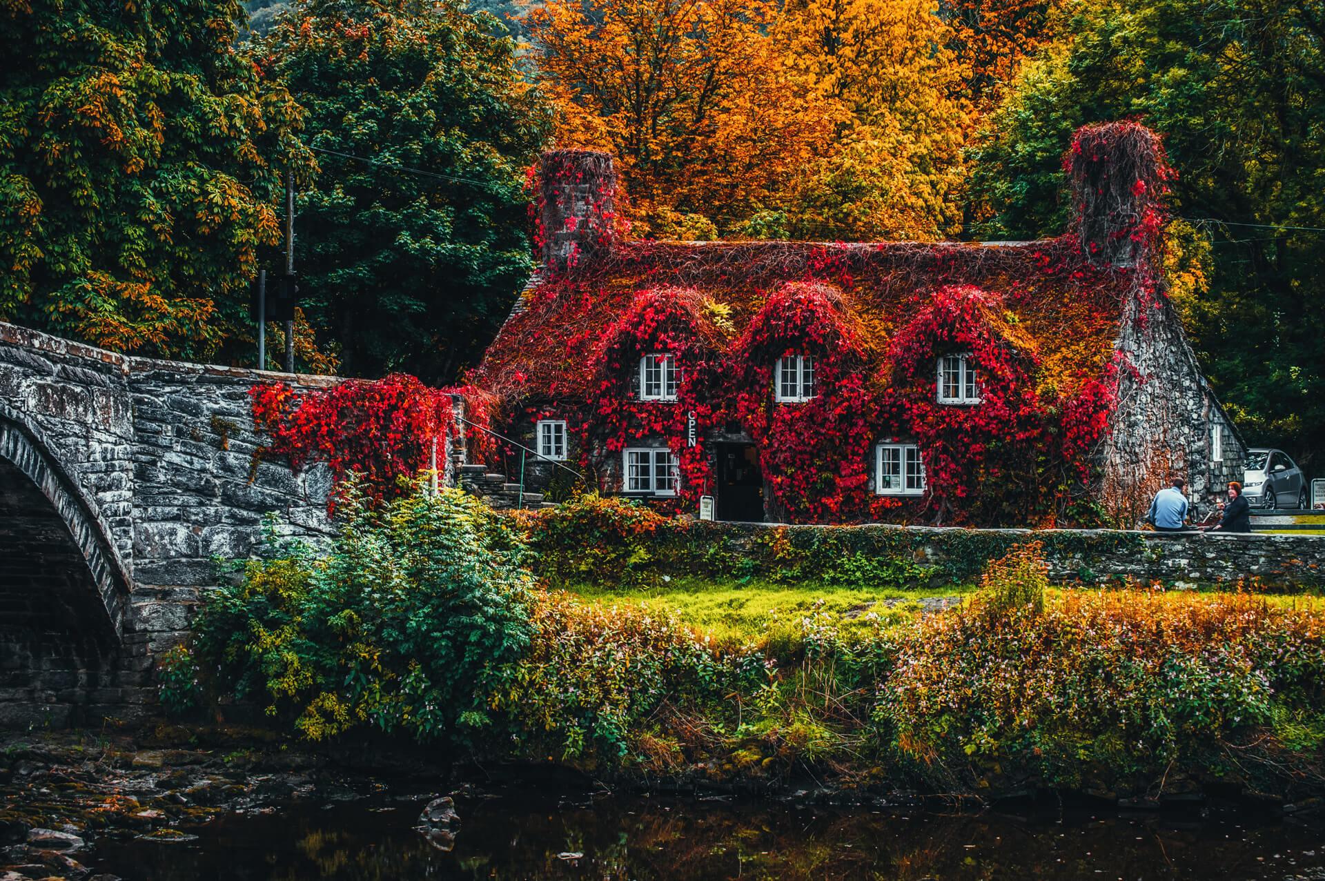 Ngôi nhà được che kín với những bông hoa màu đỏ