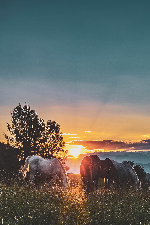 4 chú ngựa trên đồng cỏ
