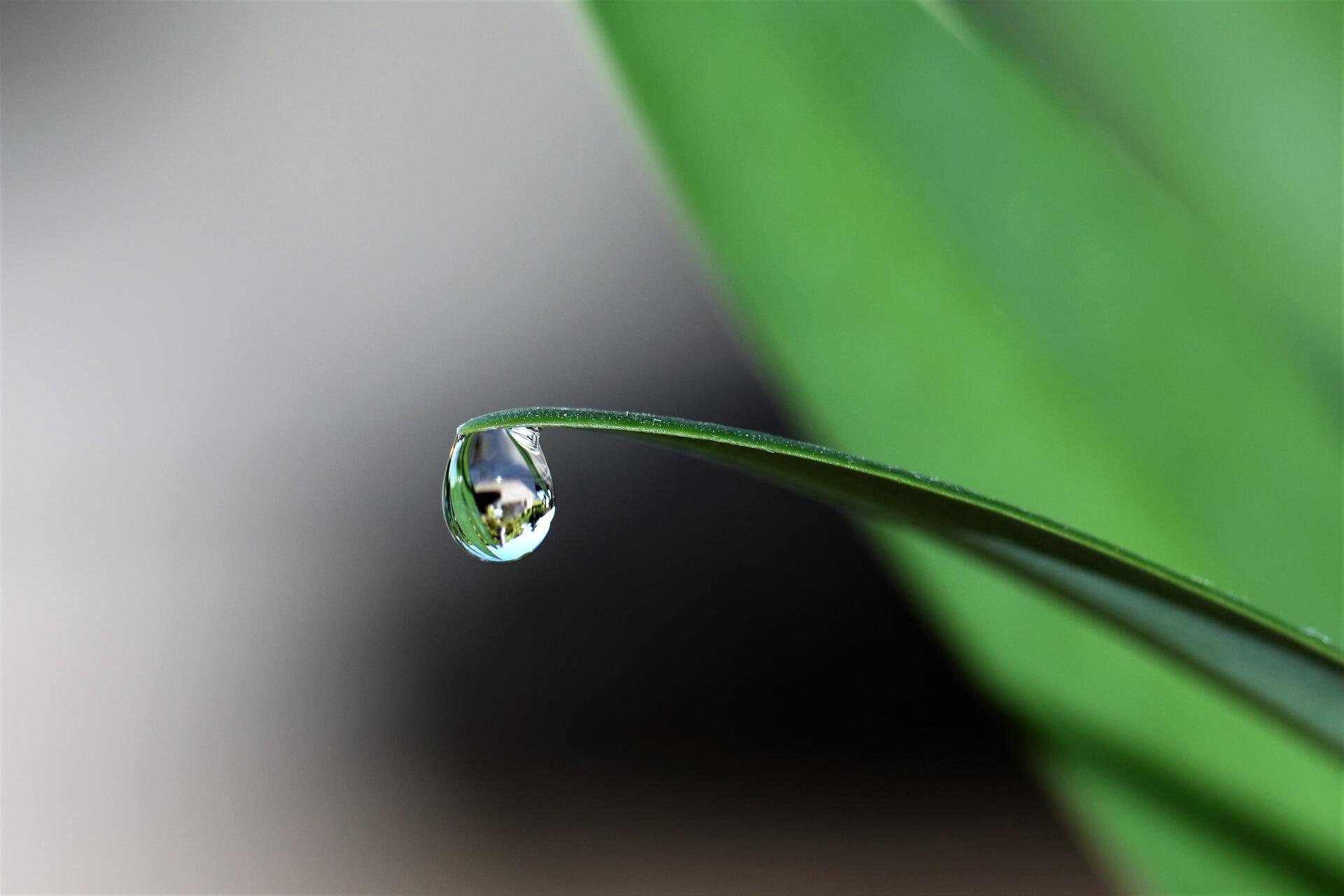 Giọt nước trên đọng trên lá