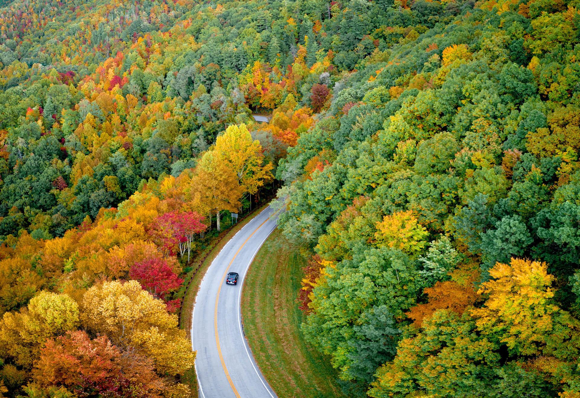 Hình nền con đường xuyên rừng khi trời vào thu
