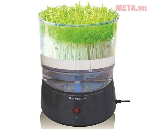 máy làm rau mầm kangaroo kg-261
