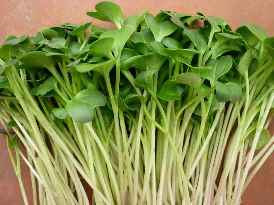 rau mầm cải