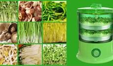 7 Lý do máy trồng rau mầm được các gia đình ưa chuộng sử dụng