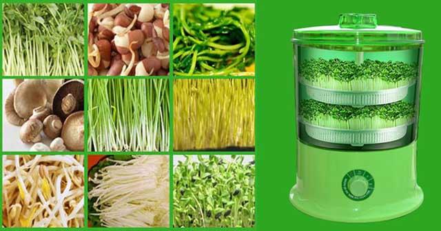 Tại sao máy trồng rau mầm được ưa chuộng