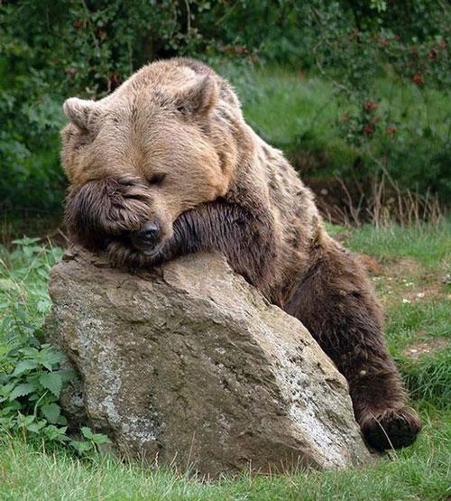 Hãy cho tôi ngủ thêm 5 phút nữa thôi