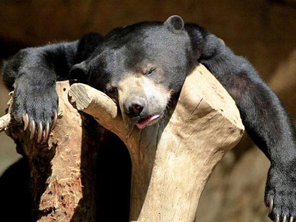 Sau một đêm say sưa anh chàng này ngủ gục luôn trên gốc cây