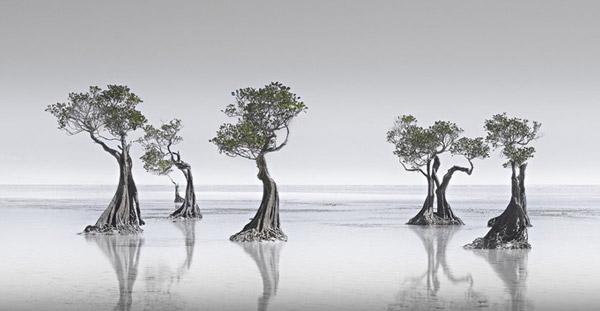 """Bức ảnh """"Dancing Mangroves"""" (tạm dịch Vũ điệu rừng ngập mặn) được chụp bởi Wong Choon Keat"""