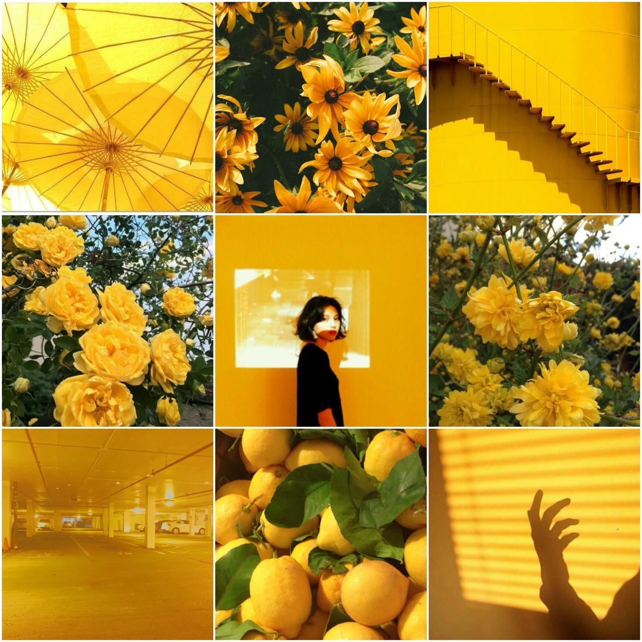 Màu vàng - Màu của sự may mắn, nguồn năng lượng dồi dào