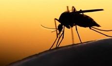 Muỗi thích ánh sáng màu gì? Đèn bắt muỗi ánh sáng xanh hay vàng tốt hơn?