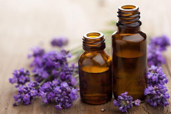 minyak atsiri lavender