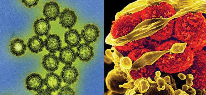 Cả virus và vi khuẩn đều có thể khiến chúng ta bị ốm