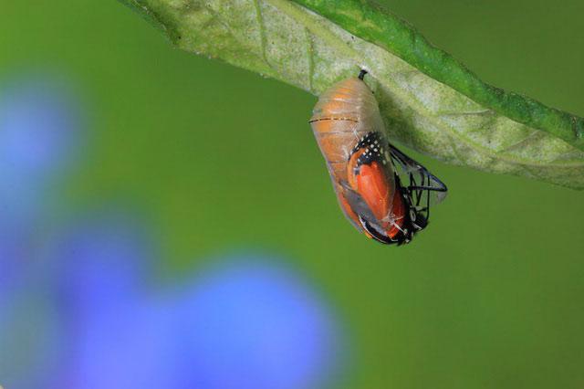 Cái kén và con bướm
