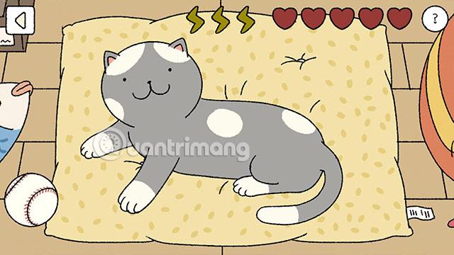 tắm cho mèo adorable home