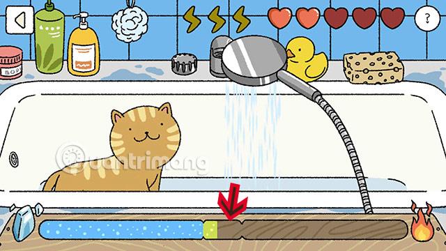 cách tắm cho mèo adorable home hiệu quả nhất