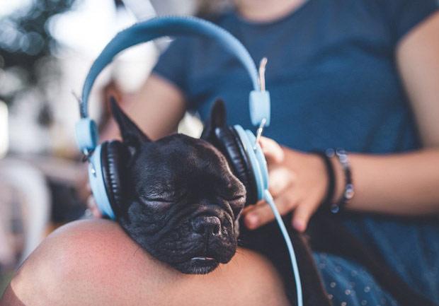 Chó biết thưởng thức âm nhạc