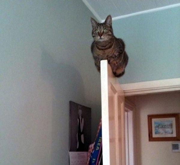 Một bằng chứng khẳng định khả năng giữ thăng bằng đỉnh cao của loài mèo
