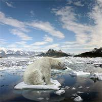 Trái đất vừa ghi nhận tháng 1 nóng nhất trong lịch sử