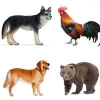 Câu đố về con vật hay nhất