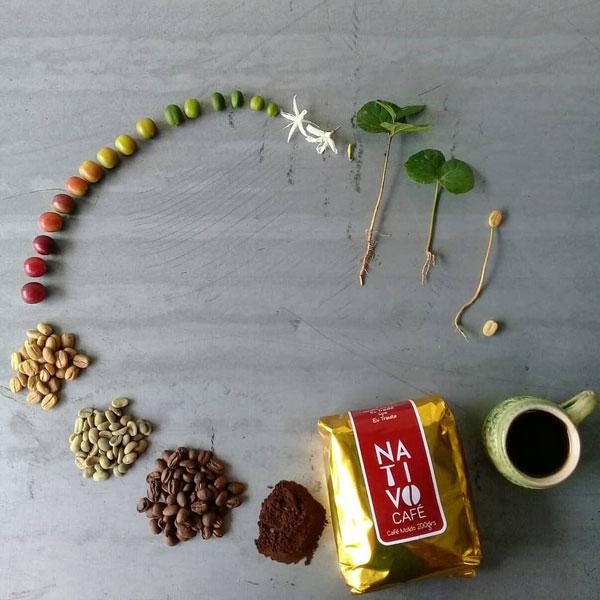 Vòng đời của hạt cà phê