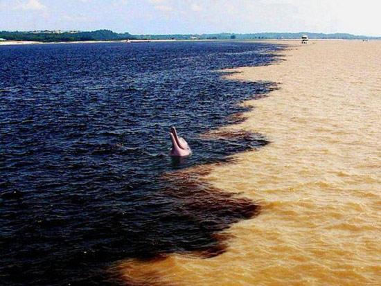 Cứ tưởng xa xôi, hẻo lánh lắm, ai ngờ cácaRanh giới giữa sông Amazon và sông Đen (Rio Negro) ở Brazil, hai dòng giao nhau nhưng nước không hòa lẫn kim tự tháp lại gần thành phố đến vậy