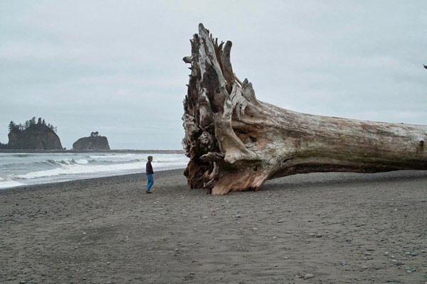 Thân cây khổng lồ