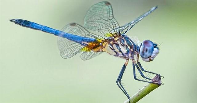 6 điều bạn chưa từng biết về chuồn chuồn