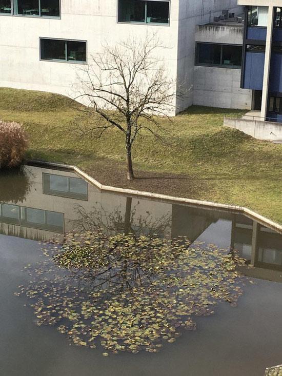 Cây trụi lá bỗng sum suê trở lại khi phản chiếu qua mặt nước