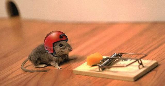 Bẫy chuột