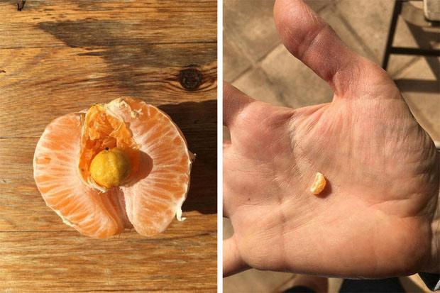 Một quả cam siêu nhỏ nằm bên trong một quả cam